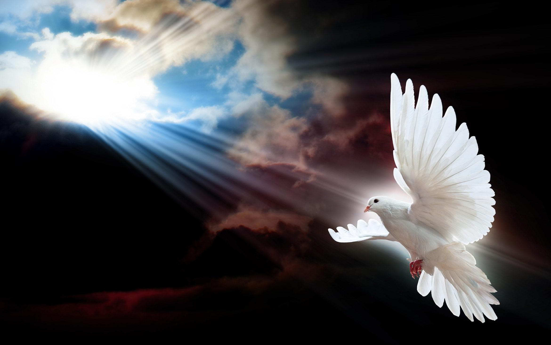 dove-sun-rays.jpg