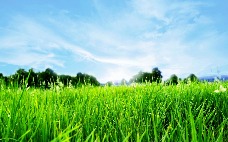 6907186-blue-sky-green-grass.jpg